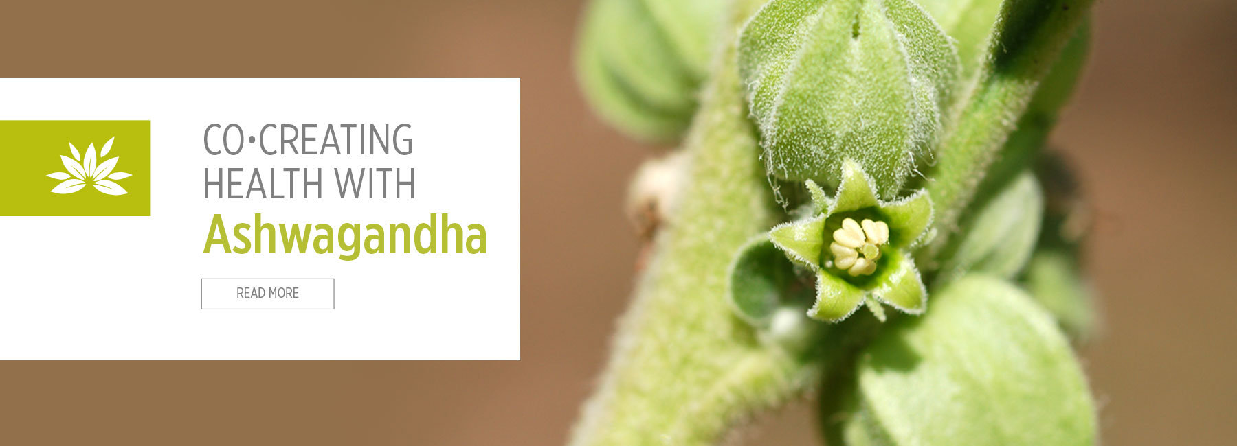 Co-Creating Health with Ashwagandha
