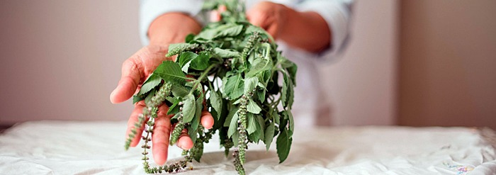 6 Essential Ayurvedic Herbs for Fall and Winter
