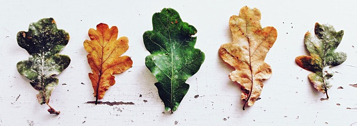 9 Signs of Autumn Imbalance and How Food Can Fix It