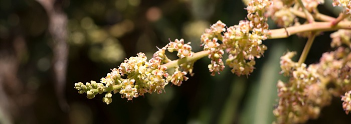 Shatavari: Getting to Know Your Herbal Allies