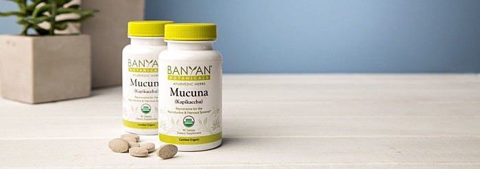 Why Mucuna (Kapikacchu) Really Is That Amazing