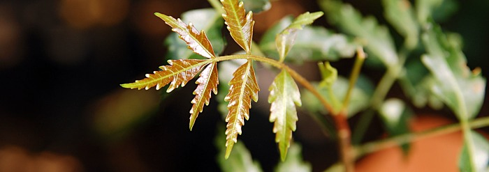 6 Ways to Use Neem for Skin & Hair