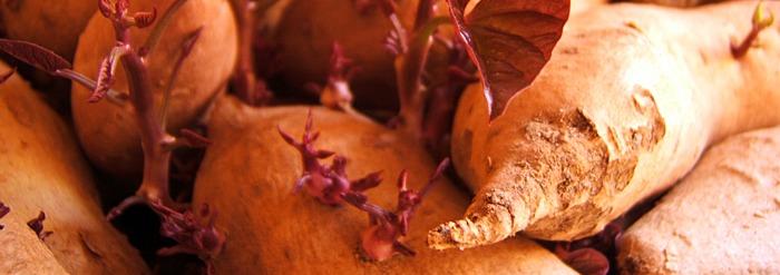 Sweet Potato Halva